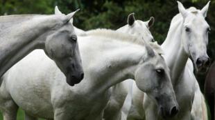 في مزرعة للخيول بولاية كاليفورنيا الأمريكية