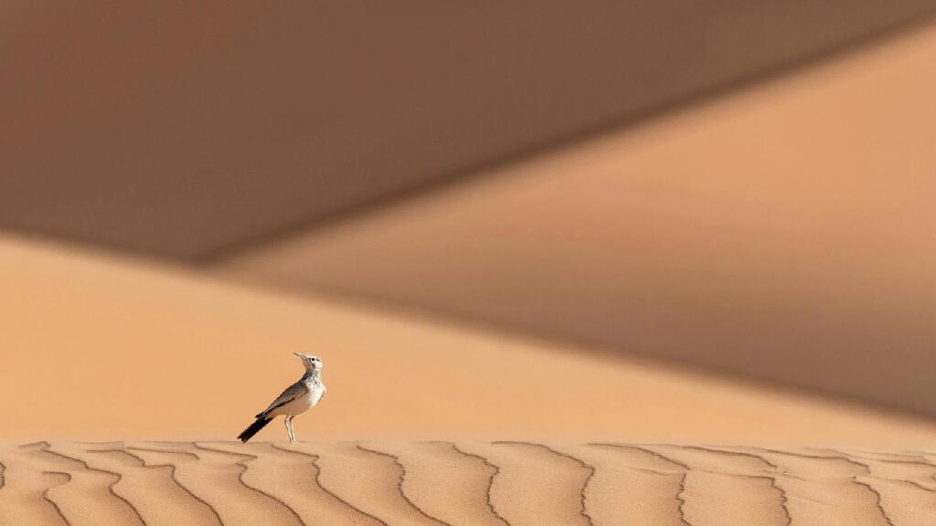 صورة بعدسة المصور البحريني زكريا العمران
