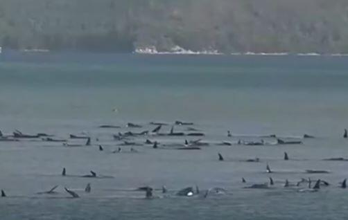 baleines australie