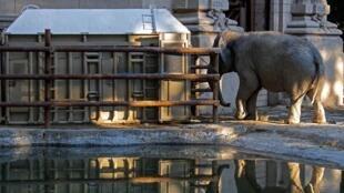 الفيلة مارا تدخل الصندوق الخشبي لتنطلق في رحلتها إلى البرازيل