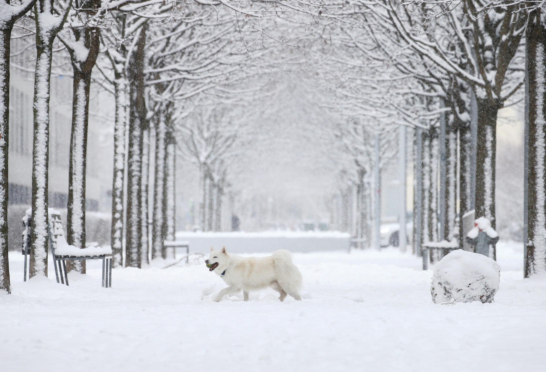 _SWISS-SNOW