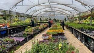 jardin_floral_palestine