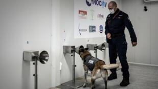 تدريب الكلاب في بوردو الفرنسية على رصد كوفيد-19