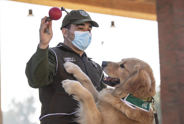 police_dog_chili_training_detect_covid