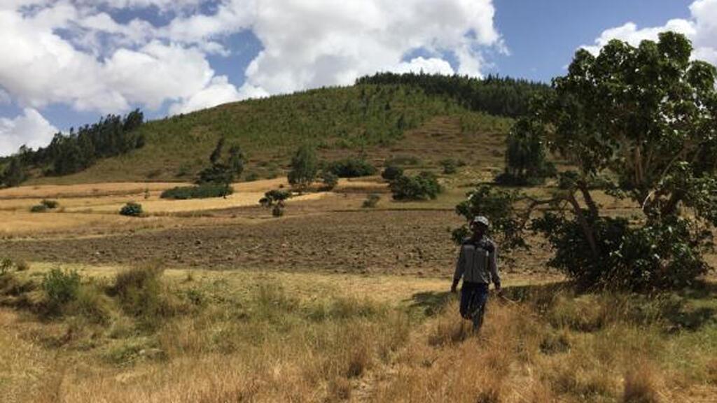 ethiopie_forestation