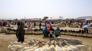 hargeisa_livestock_market_somaliland