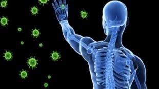 Corona et système immunitaire
