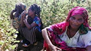 2020-11-13T143509Z_1556920377_RC2E2K9D98J8_RTRMADP_3_ETHIOPIA-CONFLICT-SUDAN
