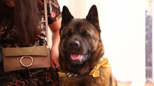 الكلبة براندي
