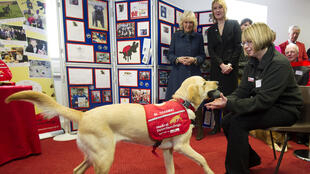 medical_detection_dogs_charity_camilla