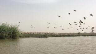 طيور البجع في إحدى المحميات (صورة تعبيرية)