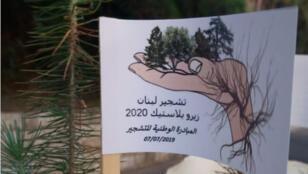 تشجير لبنان