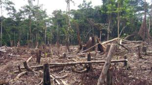 قطع الشجار في الأمازون