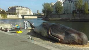 مجسّد لحوت العنبر على ضفة نهر السين في باريس 21-07-2017