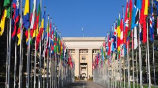 هيئة الامم المتحدة