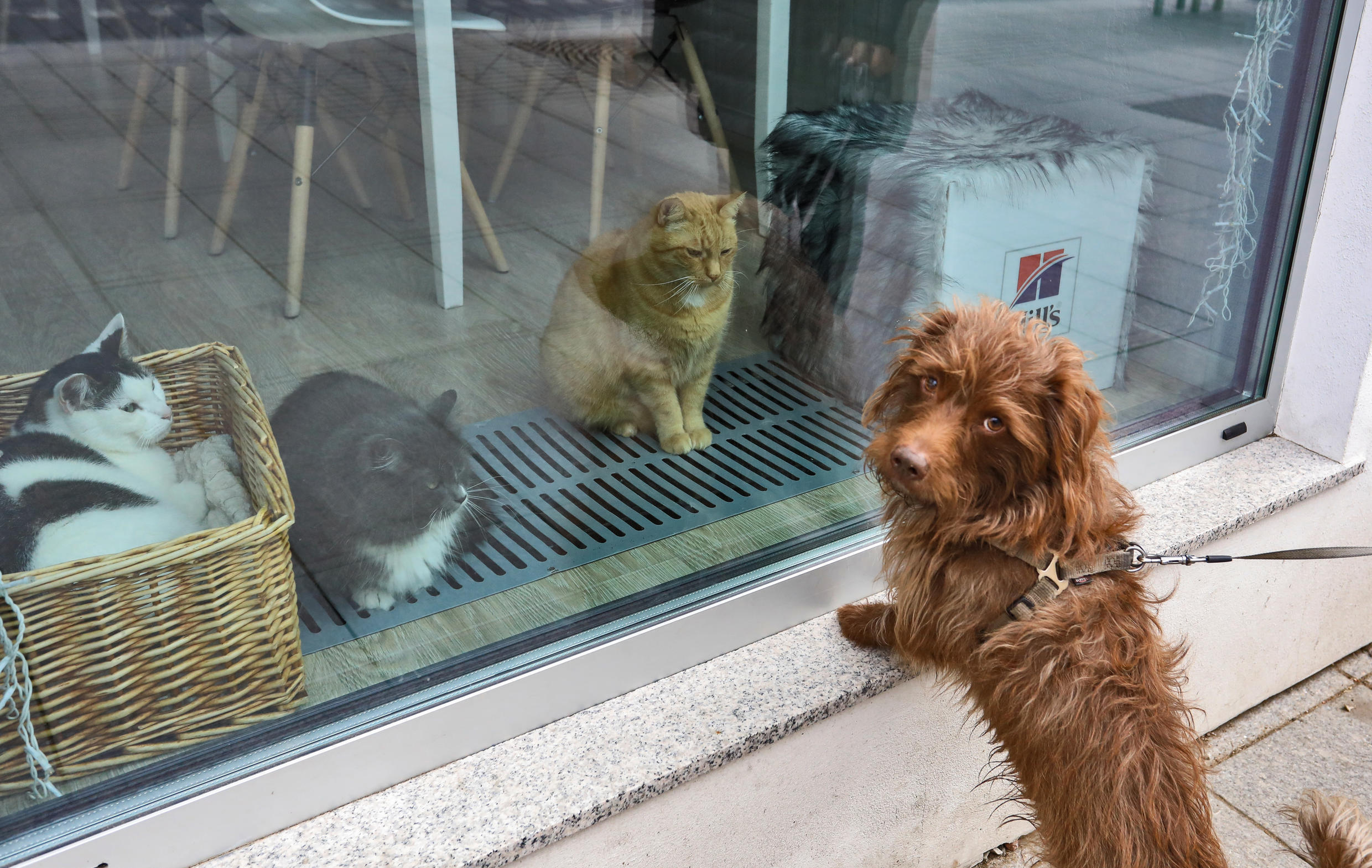 chien- chat
