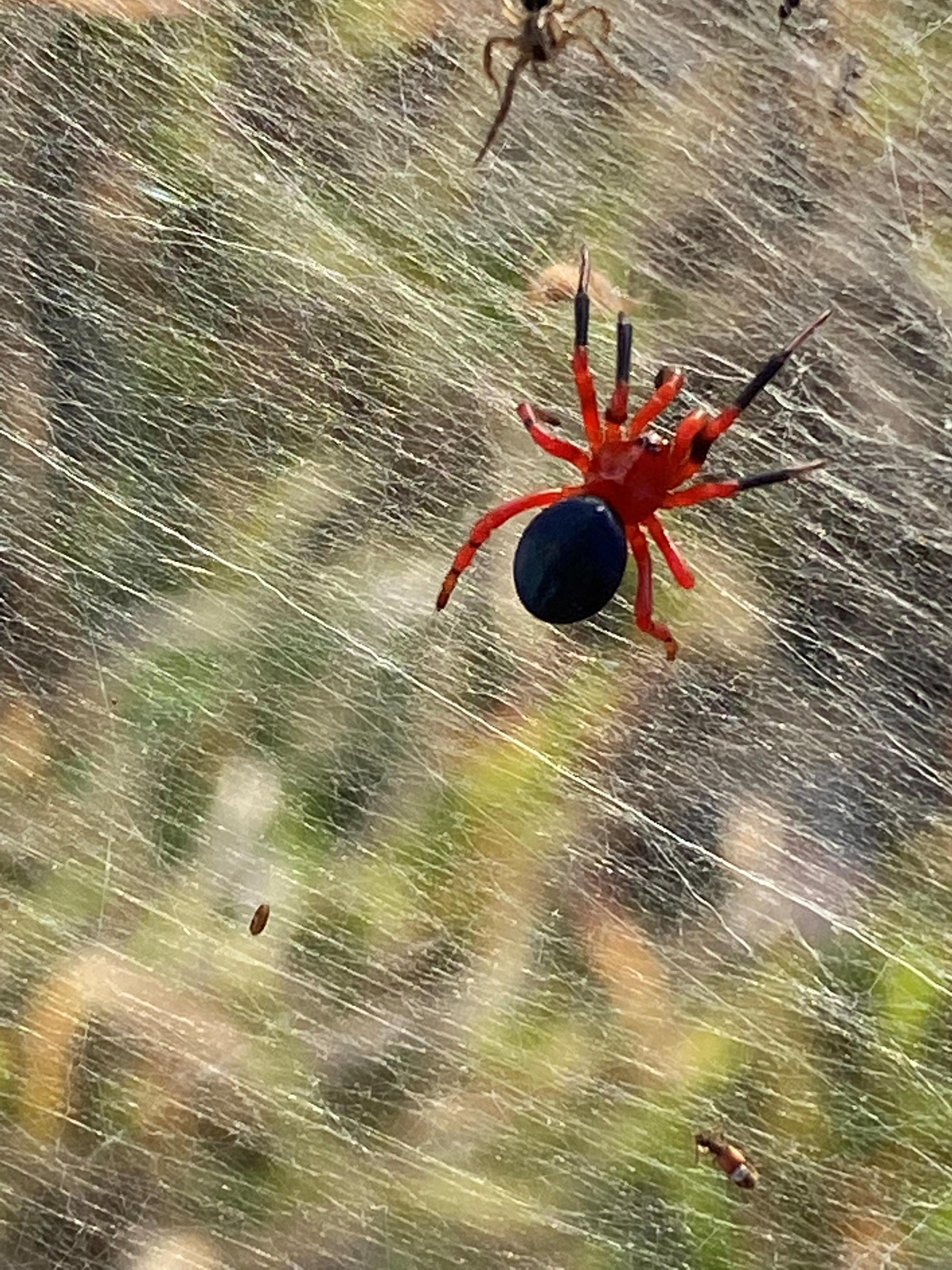2021-06-16T065756Z_1418954885_RC250O92ELV8_RTRMADP_3_AUSTRALIA-SPIDERS-WEB