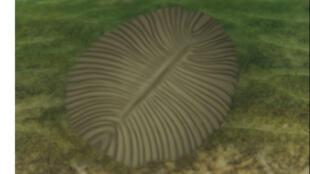 """أحد المتحجرات العائدة لكائنات """"ديكينسونيا"""""""