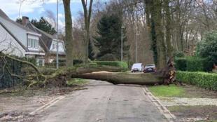الأضرار التي تسببت بها الرياح في بلجيكا