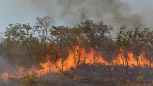 غابات الأمازون في البرازيل تحترق