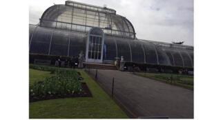 بيت زجاجي للنباتات في لندن