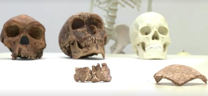 prehistoric_human_race_israel