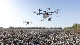 طائرات بدون طيار تطوف فوق الأراضي الزراعية