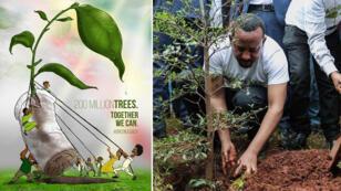 زراعة الشجر في أثيوبيا