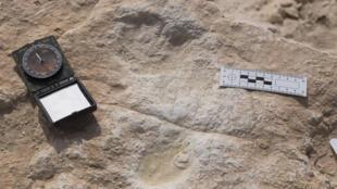 تُظهر هذه الصورة آثار أقدام بشرية وحيوانية قديمة اكتشفت في السعودية