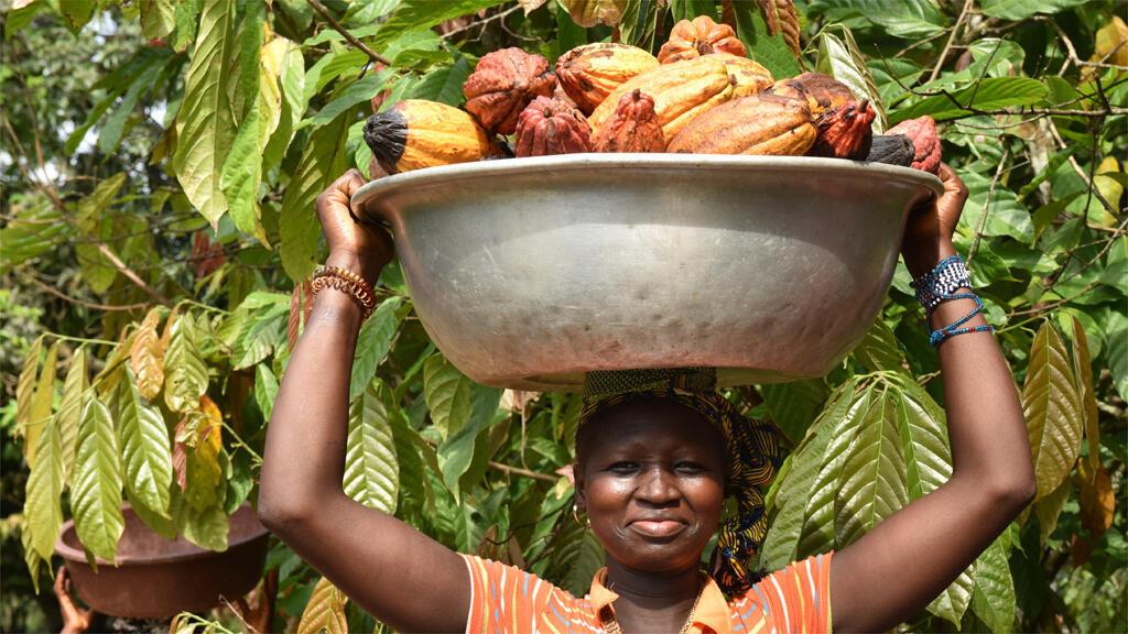 سيدة تحمل ثمار الكاكاو في ساحل العاج