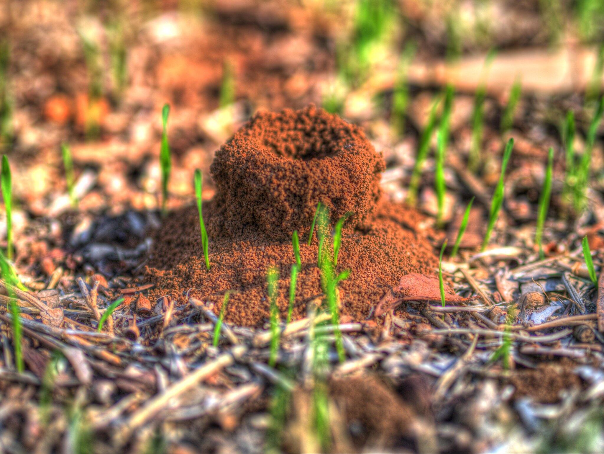 مستعمرات النمل