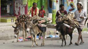 مواطنون يستخدمون الحمير الحمير لنقل الحطب وسط النقص الحاد للوقود في تعز 19 مايو 2015