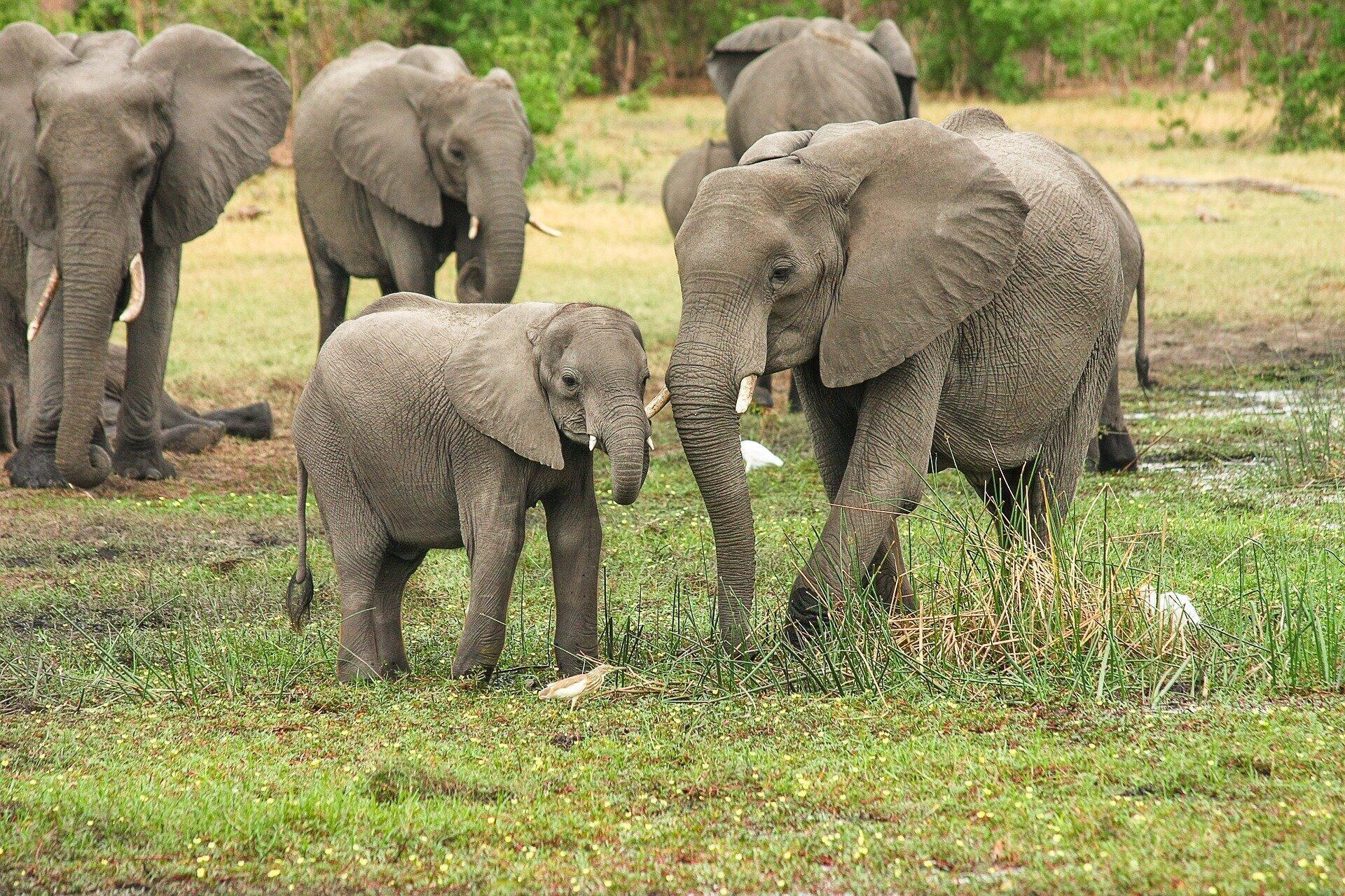 elephants-2923917_1920