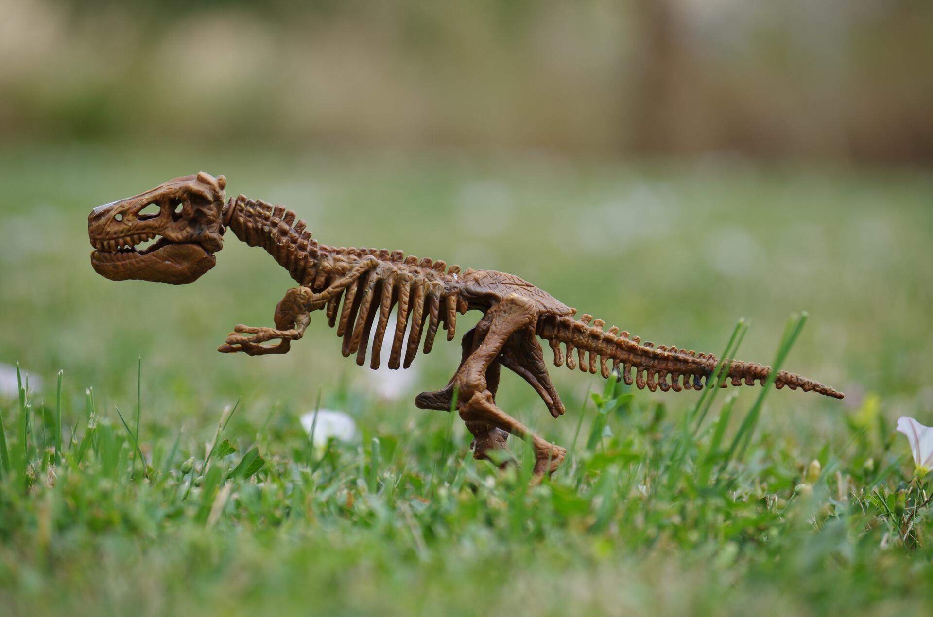 dinosaur-1512250_1920
