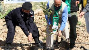 أردنيون يشاركون في زراعة أشتال الأوكالبتوس والخروب بالقرب من غابة كفرنجة شمال عمان يوم 11 فبراير 2021 كجزء من جهود إعادة تشجير تهدف إلى زرع 10 ملايين شجرة في 10 سنوات