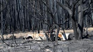 australie_incendies_terre_kangarou