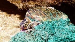 Turtle_marine_debri
