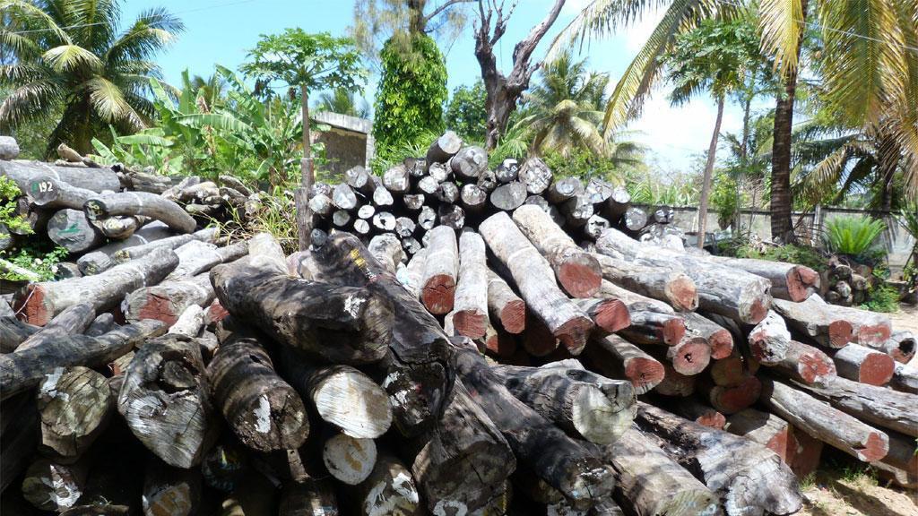 غابات مدغشقر فقدت 44% من مساحاتها في ستة عقود فقط