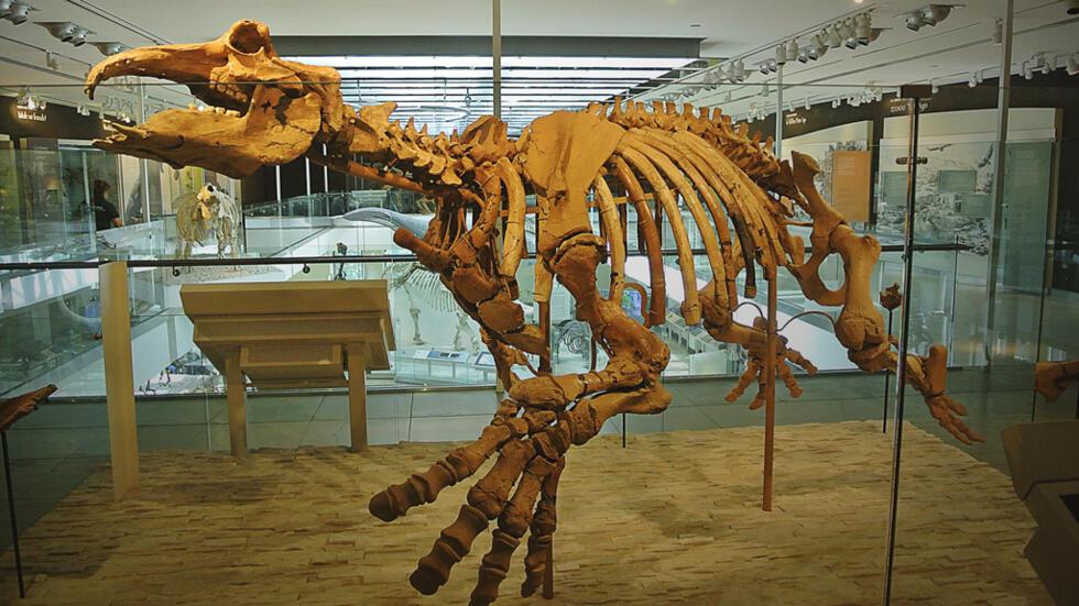 الديناصورات حيوانات انقرضت منها هياكلها