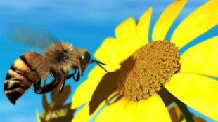 النحل الطنان