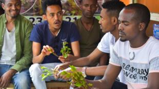 شبان يمضغون القات في أحد المتاجر في أديس أبابا