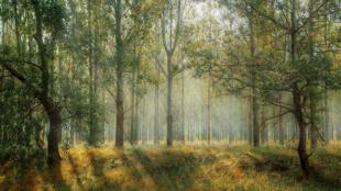 غابة حضرية