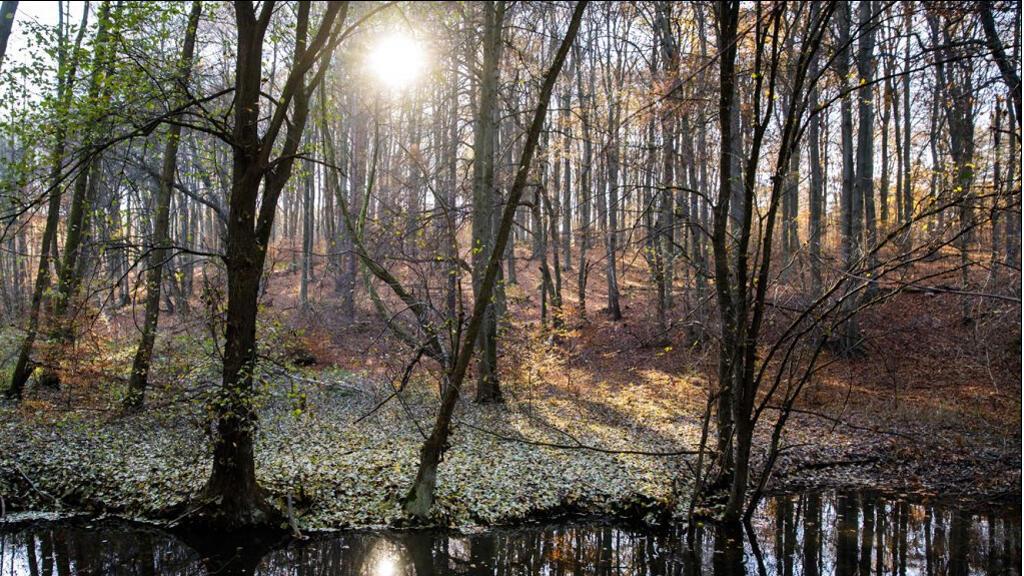 مبدأ التضامن بين أشجار الغابات قوي جدا
