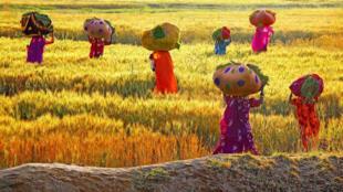 المرأة الريفية في باكستان