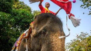 فيل في مدينة أيوتايا التايلندية