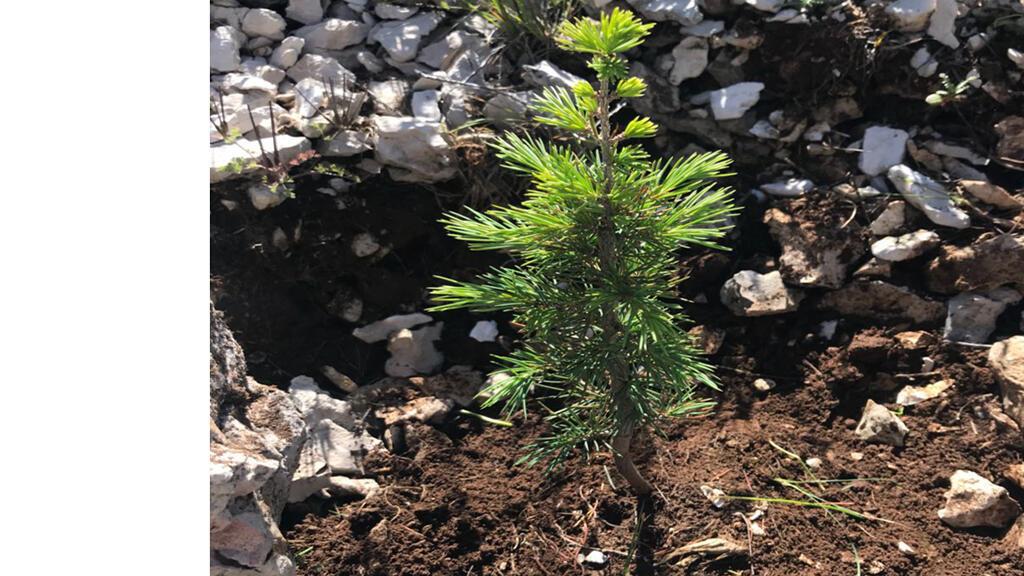 """جمعية """"بذور لبنان"""" تساهم في إحياء غابات فقدت غطاءها لعدة أسباب"""