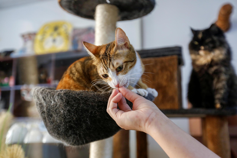 2021-02-28T100228Z_1641444293_RC2M1M9YP6VF_RTRMADP_3_EMIRATES-ANIMALS-CAT-CAFE