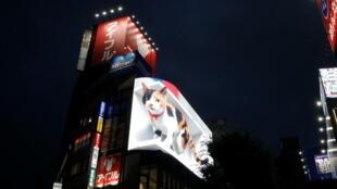 قط ثلاثي الأبعاد في طوكيو، اليابان