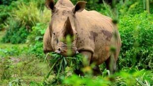 وحيد القرن (صورة تعبيرية)