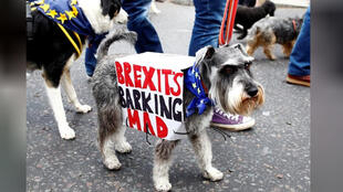 محتجون مناهضون لخروج بريطانيا من الاتحاد الأوروبي في مسيرة مع كلابهم في لندن يوم الأحد